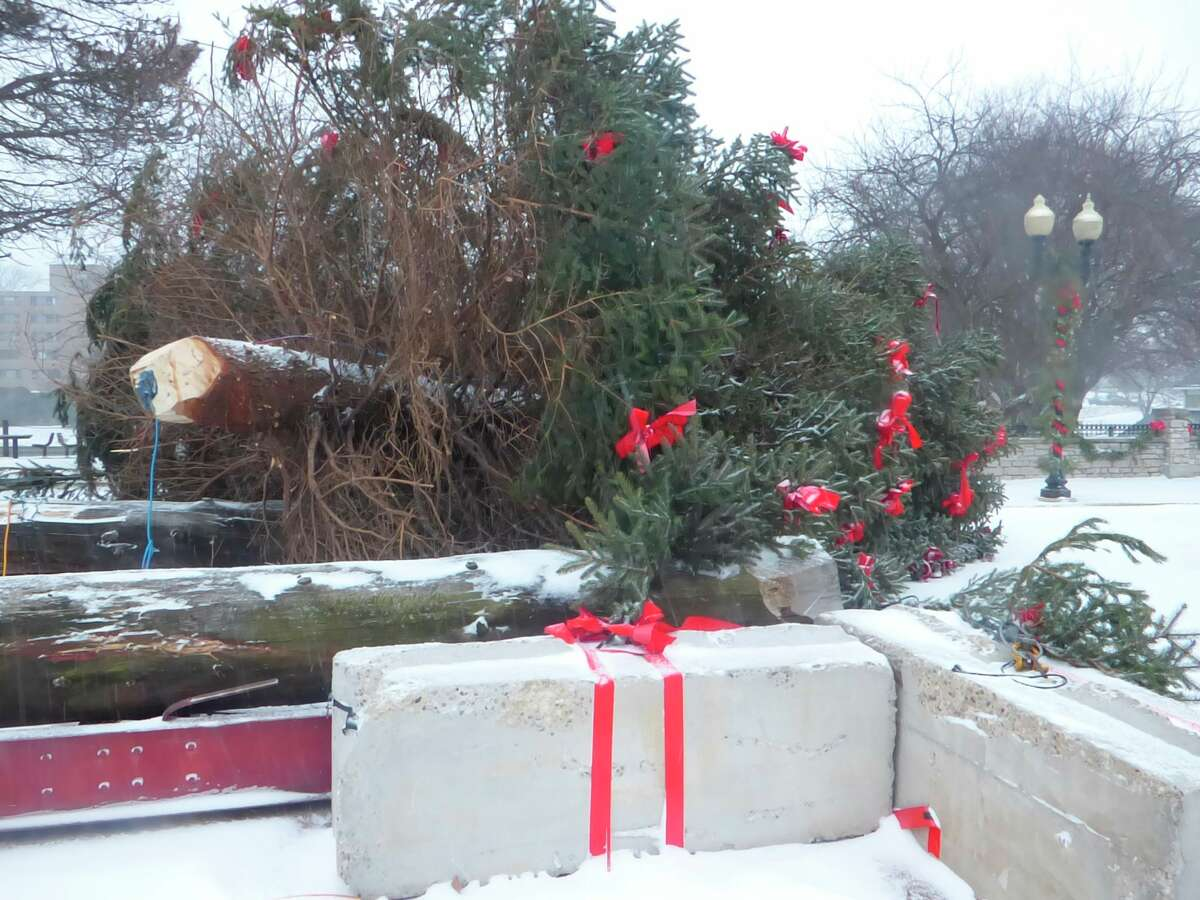 Manistee Department of Public Works officials plan to remove the downtown Christmas tree that fell on Christmas Eve, sometime next week. (Scott Fraley/News Advocate)