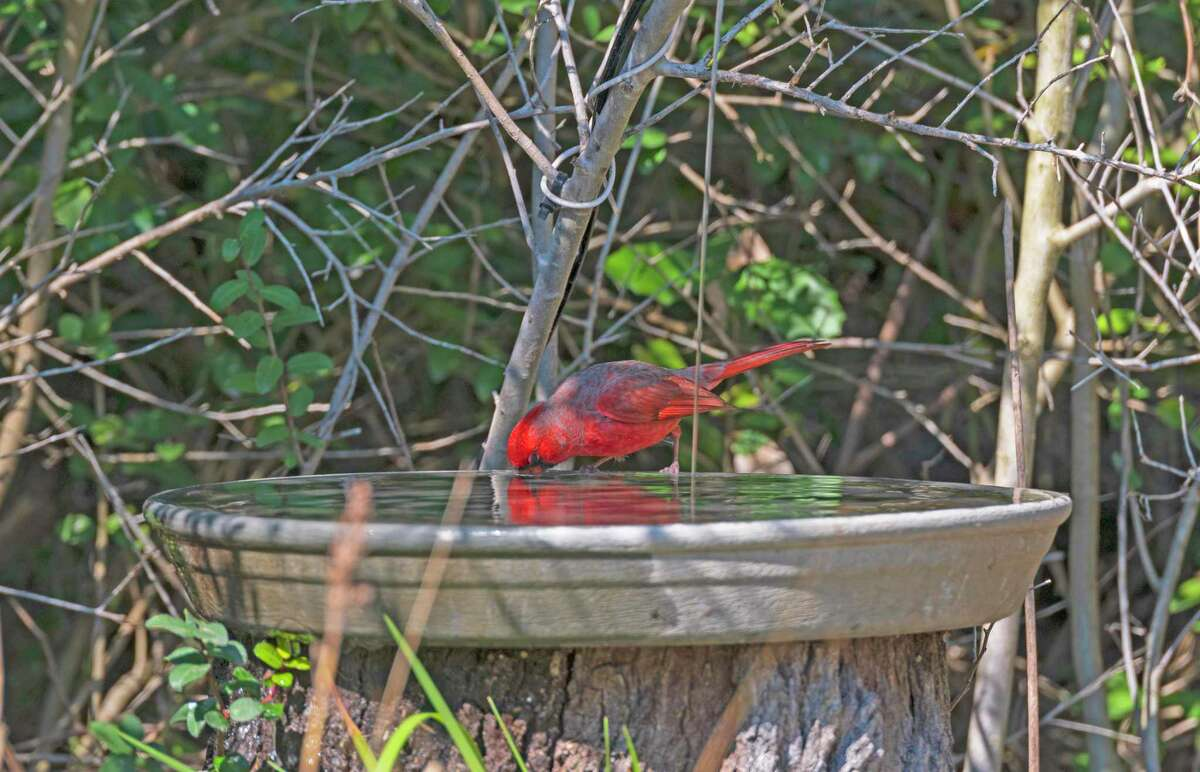 This year has been so dry, providing fresh water in bird baths is especially important.