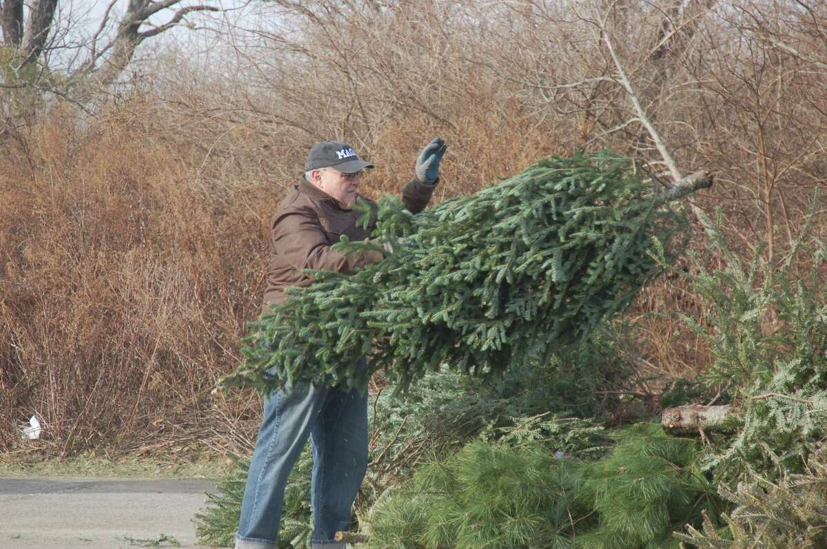 Town resident Ralph DeVito drops off his own tree at Greenwich Point in 2019. DeVito had hoped to set a record by dropping his brother's tree off for recycling on the morning of Christmas Eve but sadly found someone had already beaten him to it. The tree recycling program will resume on Dec. 26 and last until Jan. 31.
