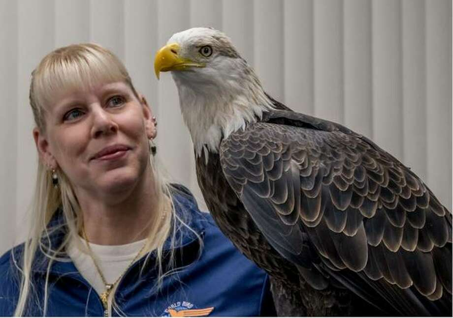 Liberty the American Bald Eagle and Jen Johnson from World Bird Sanctuary will be part of this year's Virtual Eagle Fest online 10 a.m. to 2 p.m. on Jan. 2.