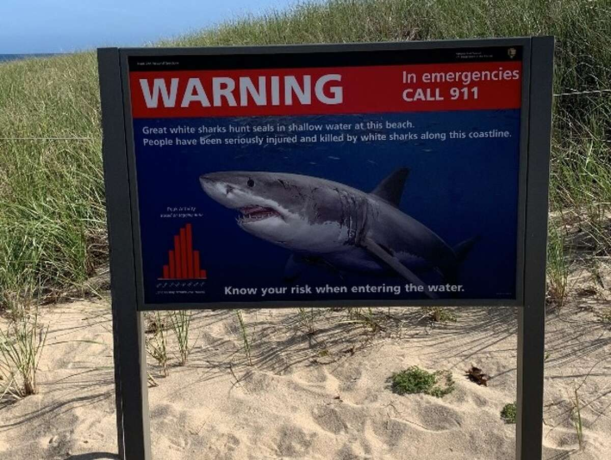 Although one of my favorite weeks is the Discovery Channel's Shark Week, I am terrified of sharks and will only go knee-deep in the ocean.