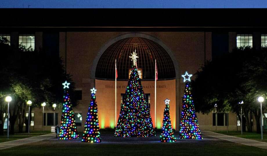 TAMIU's Christmas trees are lit up Tuesday, Dec. 15 behind the Sue & Radcliffe Killam Library. Photo: Danny Zaragoza /Laredo Morning Times