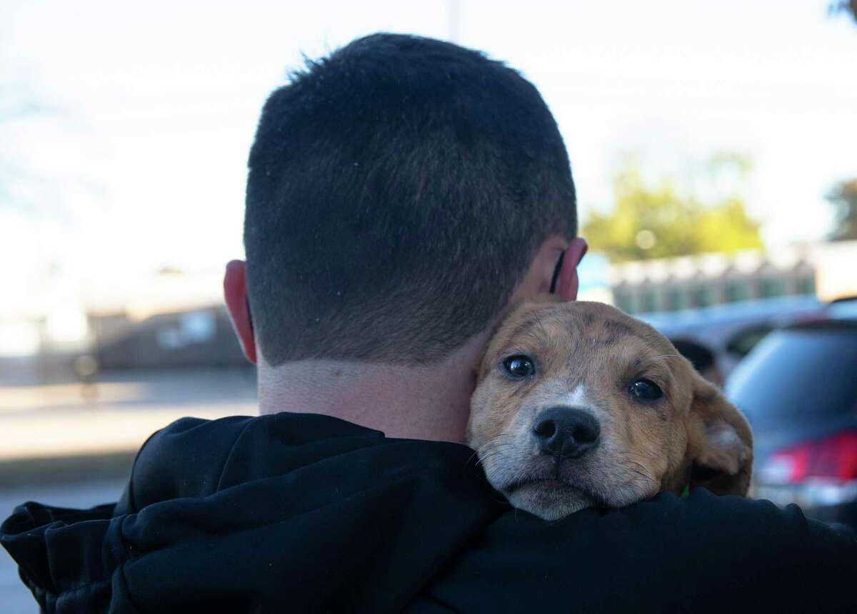 A puppy rests on the shoulder of Rescued Pets Movement volunteer Ryenn Traywick while waiting to be checked in for transporting to Colorado,Monday, Dec. 21, 2020, at Rescued Pets Movement in Houston.