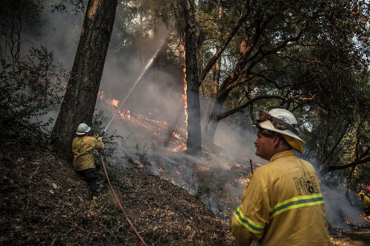 Firefighters with a PG&E crew spray down a tree during a controlled, intentional burn in Healdsburg in November.