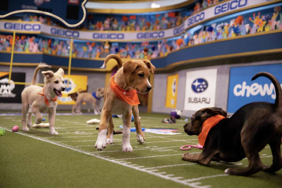 Connecticut had 19 puppies and dogs participating in the 2020 Puppy Bowl and Dog Bowl during Super Bowl weekend.