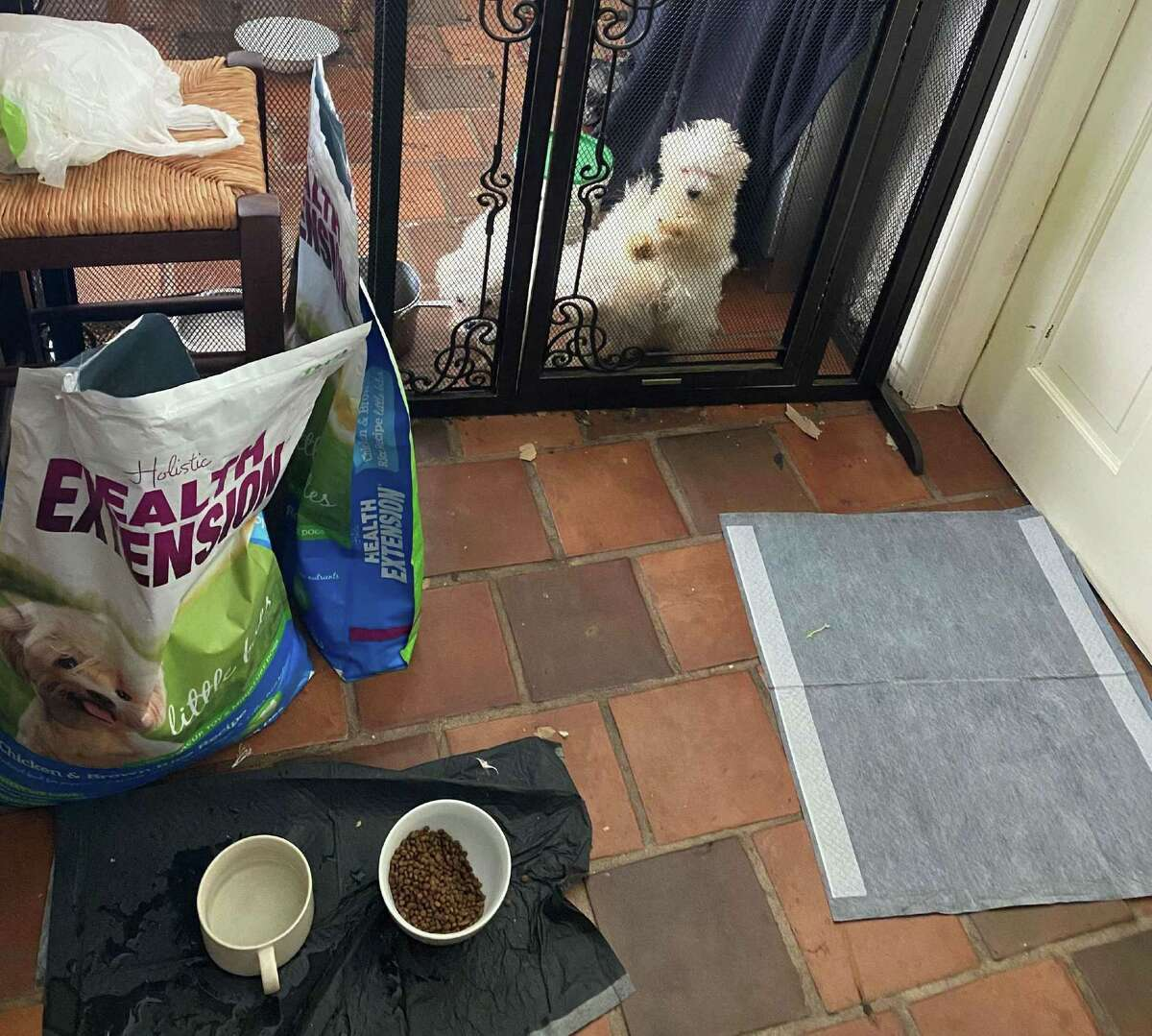 Two puppies inside an enclosure in the kitchen in Catherine Palmer's Butler Lane in New Canaan, where 12 dogs were seized after three died. Warning: Some of these photos, which have been entered into evidence, may be unsettling to some.