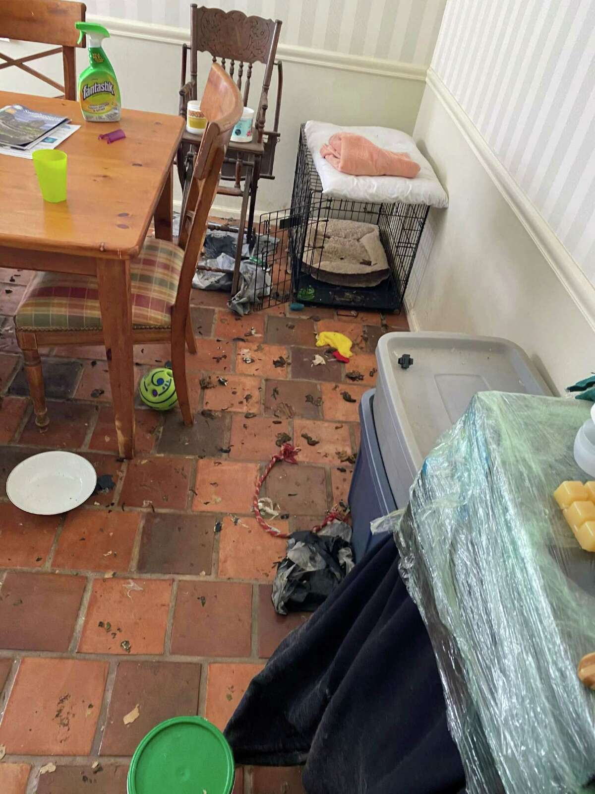 Photos submitted by the plaintiff, the Town of New Canaan, showing conditions for dogs inside Catherine Palmer's Butler Lane home, where 12 dogs were seized after three died. Warning: Some of these photos, which have been entered into evidence, may be unsettling to some.