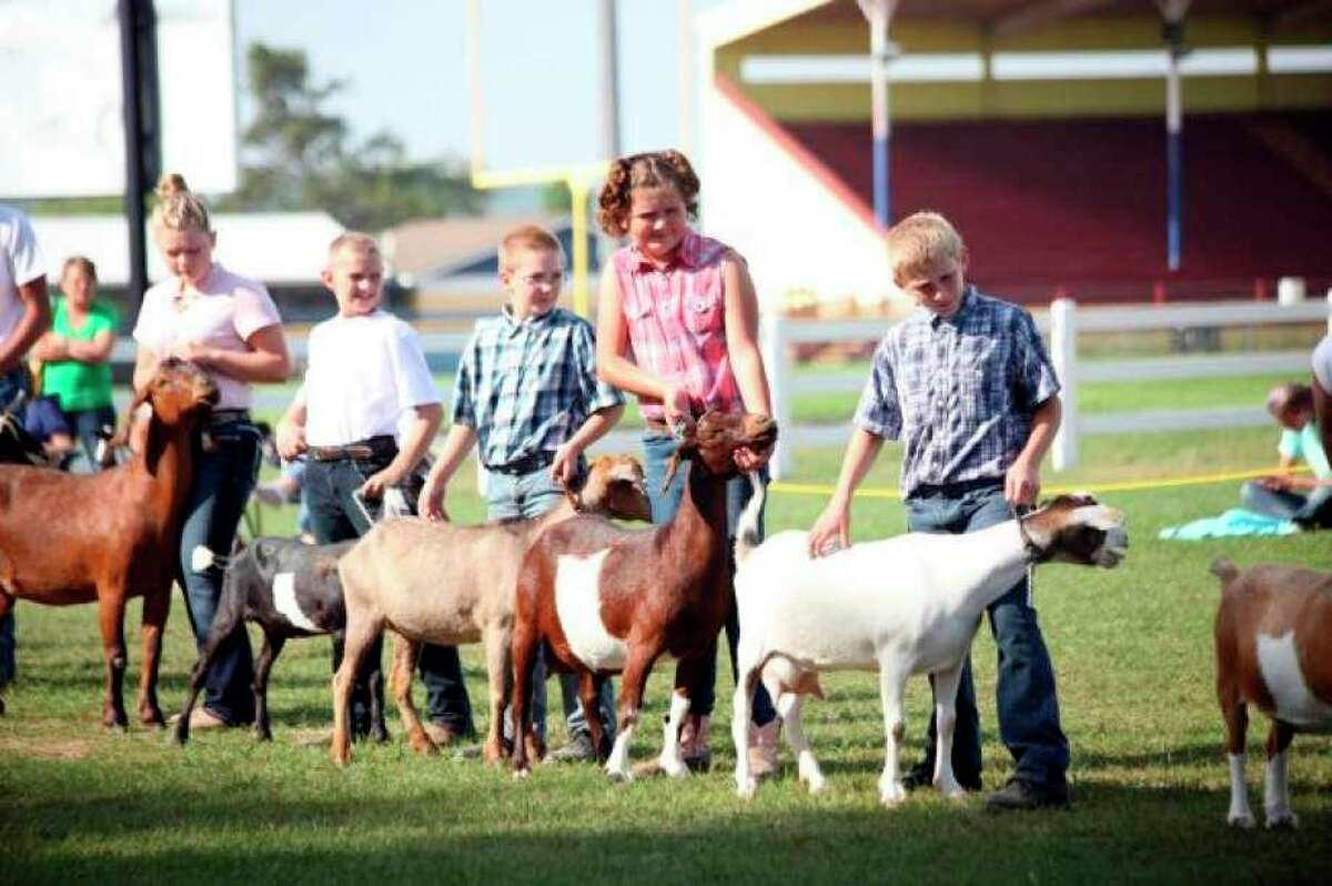 FILE - The Mecosta County Agricultural Free Fair offers local 4-H members the chance to show and sell their animals. It is back for 2021 starting Monday, July 12. (Pioneer file photo)