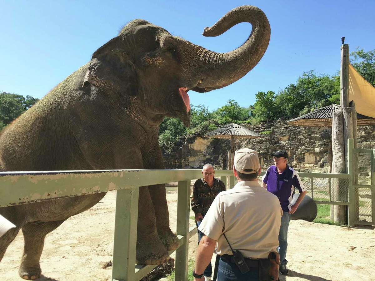 Keith Hodges, right, and Raymond Figueroa who reunited after four decades watch a zoo keeper work with Lucky the Elephant. Hodges and Figueroa worked with Lucky in the early 1970s.