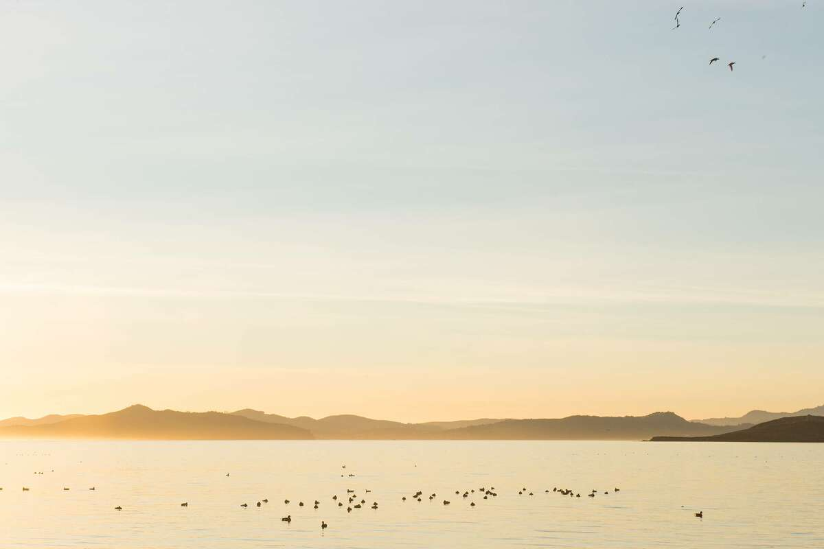 I counted 70 ducks in the Bay. The wildlife was pretty incredible.