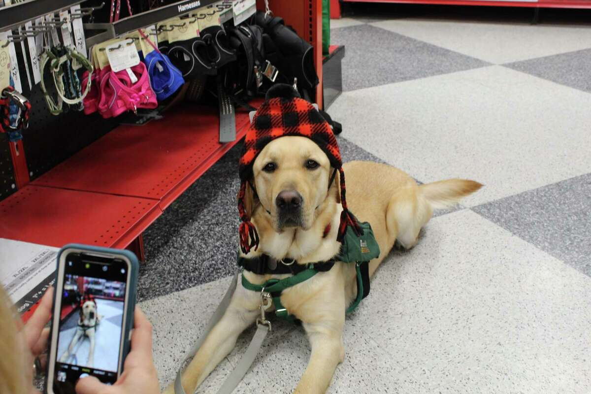 A service dog at Educated Canines Assisting with Disabilities in Winchester.