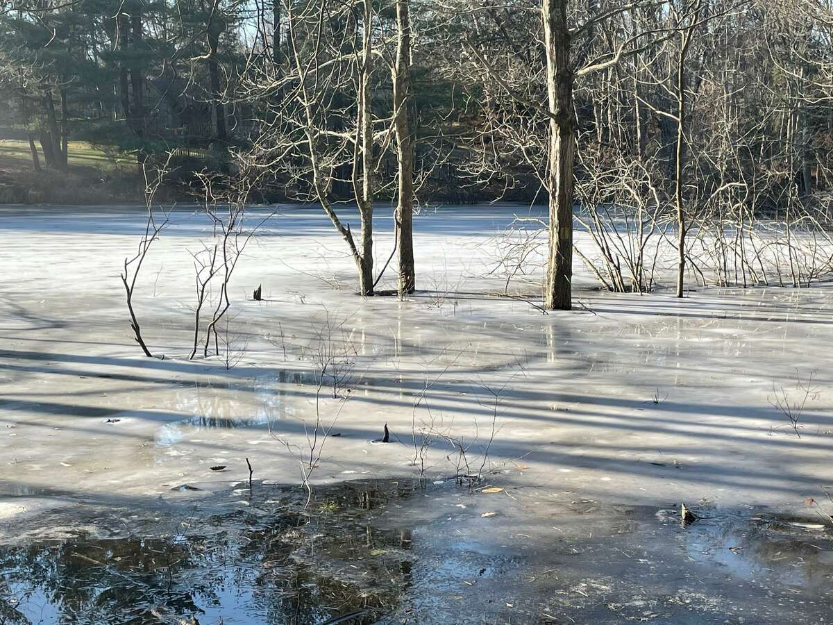 A colony of beavers has dammed Boehm Brook just before it flows under Winthrop Woods Road, which has resulted in the water level raising an estimated 4 feet. The brook is along Boehm Pond trail.