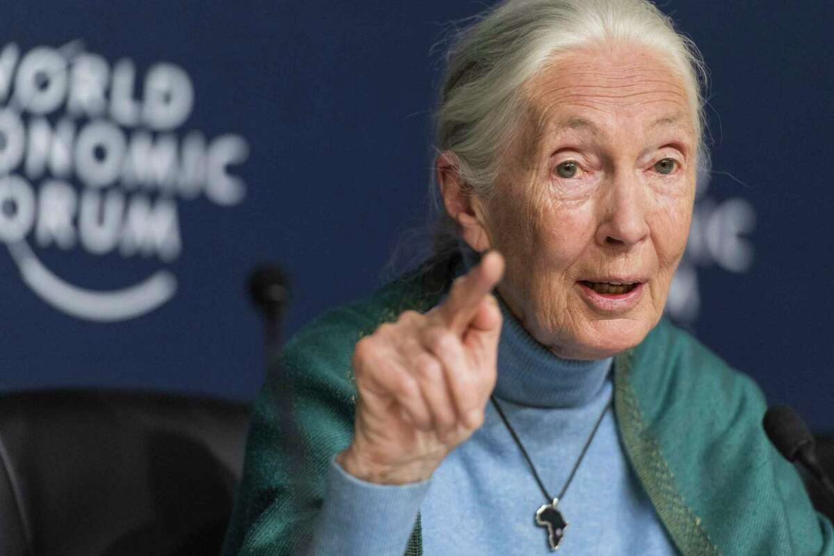 FILE - In this Jan. 22, 2020 file photo Jane Goodall, English primatologist and anthropologist, addresses the media during a press conference as part of the 50th annual meeting of the World Economic Forum (WEF) in Davos, Switzerland. Celadon Books announced Monday, Feb. 24, that Goodall's