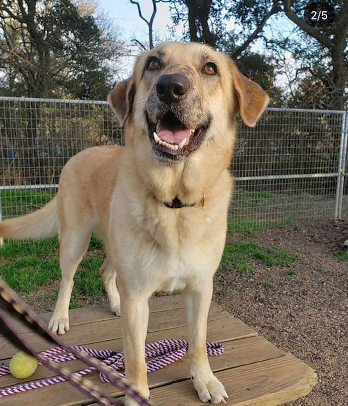 """""""This sweet girl wants what every dog wants, to be in a loving home where she can feel safe and comfortable,"""" the shelter said online. """"Dakota is a beautiful, playful dog with so much love to give."""""""