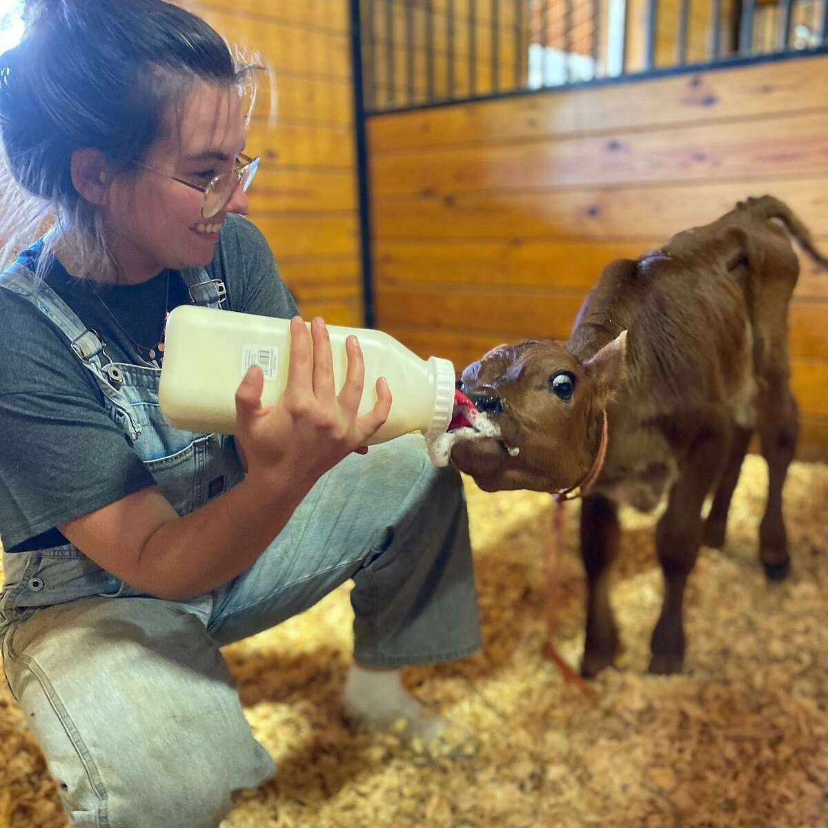 Tiffany Paltauf feeding one of her 17 rescued animals at the Sleepy Pig Farm and Animal Sanctuary. Paltauf is taking the organization's 17 rescue animals to a 10-acre farm in Granville, New York to have more space while dodging Connecticut price tags. She and her husband have been renting farmland for the animals but say it has become too costly. As the sanctuary moves to a new location, Paltauf created a GoFundMe to help the donation-dependent organization make necessary repairs to the new property. They have raised nearly $1,000 of their $50,000 goal.