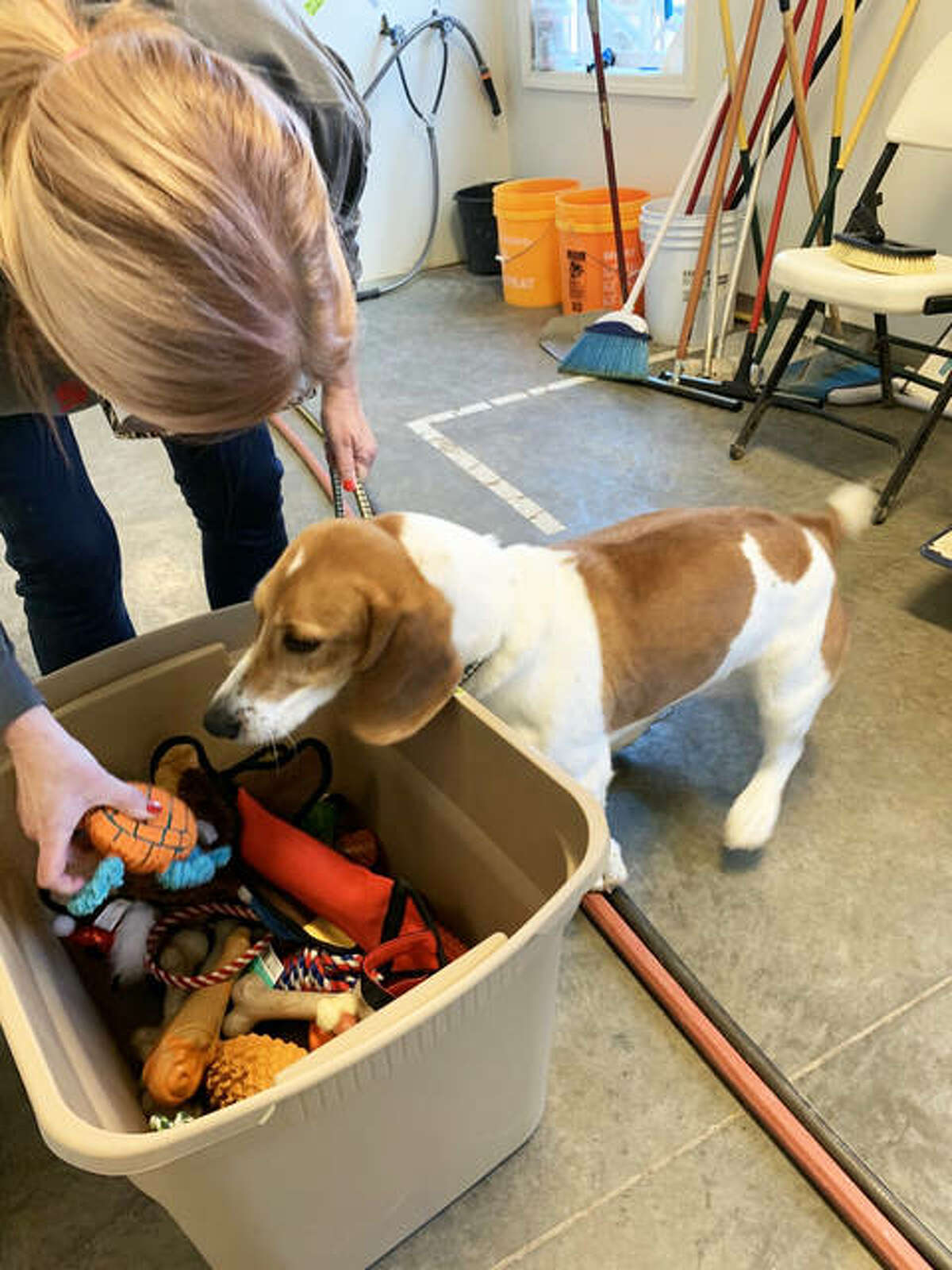 The dogs at Hope Animal Rescues in Godfrey on Christmas Day received special gifts and a holiday feast, thanks to group's volunteers. The animals had a turkey dinner with all the trimmings, cooked by volunteers, and every dog got a homemade treat.