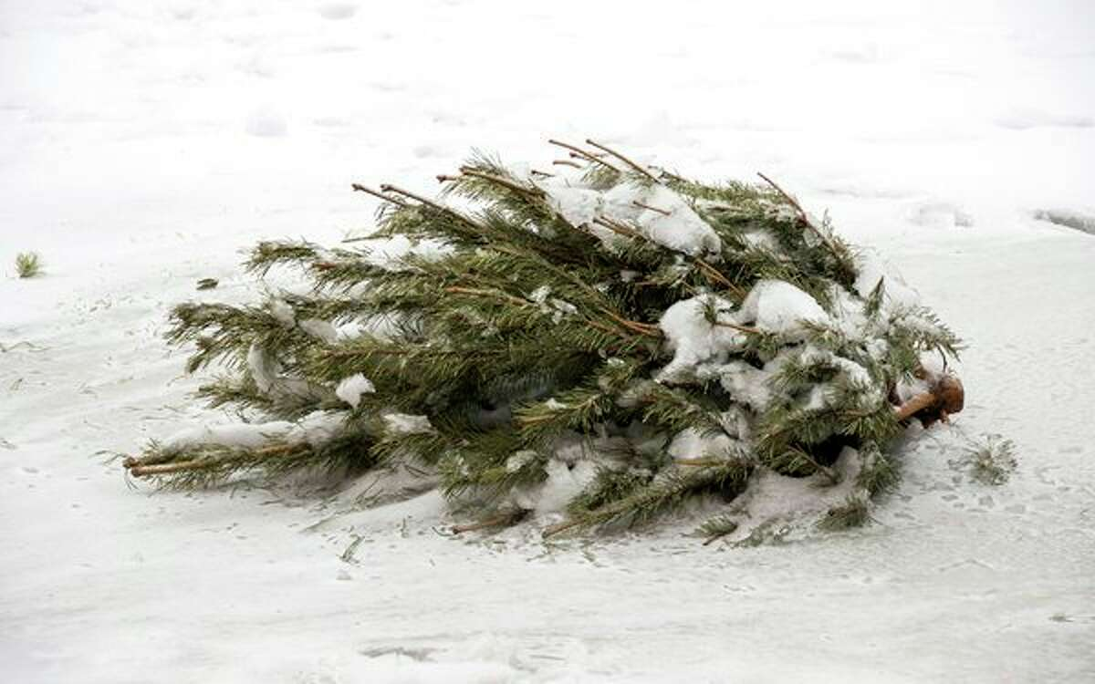 Local DPWs will be collecting live Christmas trees through January. Residents can place their tree curbside for pickup. (Pioneer file photo)