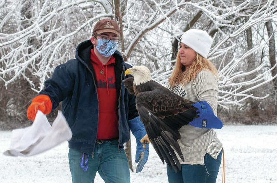 Sam White (left) and Kerry Lennartz, clinic supervisor for Treehouse Wildlife Center, release a bald eagle Saturday after it spent two months in rehabilitation. The eagle had four fractures and was found on private land near Jacksonville. Photo: Darren Iozia | Journal-Courier
