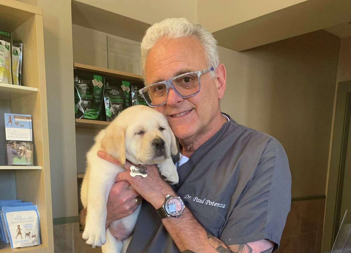 Veterinarians in the area say they have been very busy during the pandemic of 2020, partially because so many people have bought new pets. Here is New Canaan veterinarian Dr. Paul Potenza with Meatball, one of his new patients.