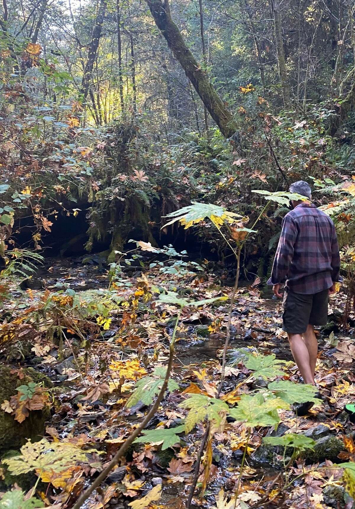 My guide leads the way to Hyperion through a frigid, foliage-filled creek.