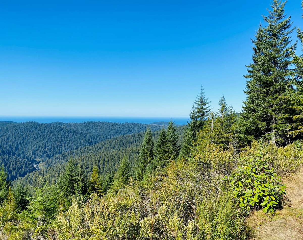 Glance to the south from the Redwood Creek Overlook and know that Hyperion is somewhere out there.