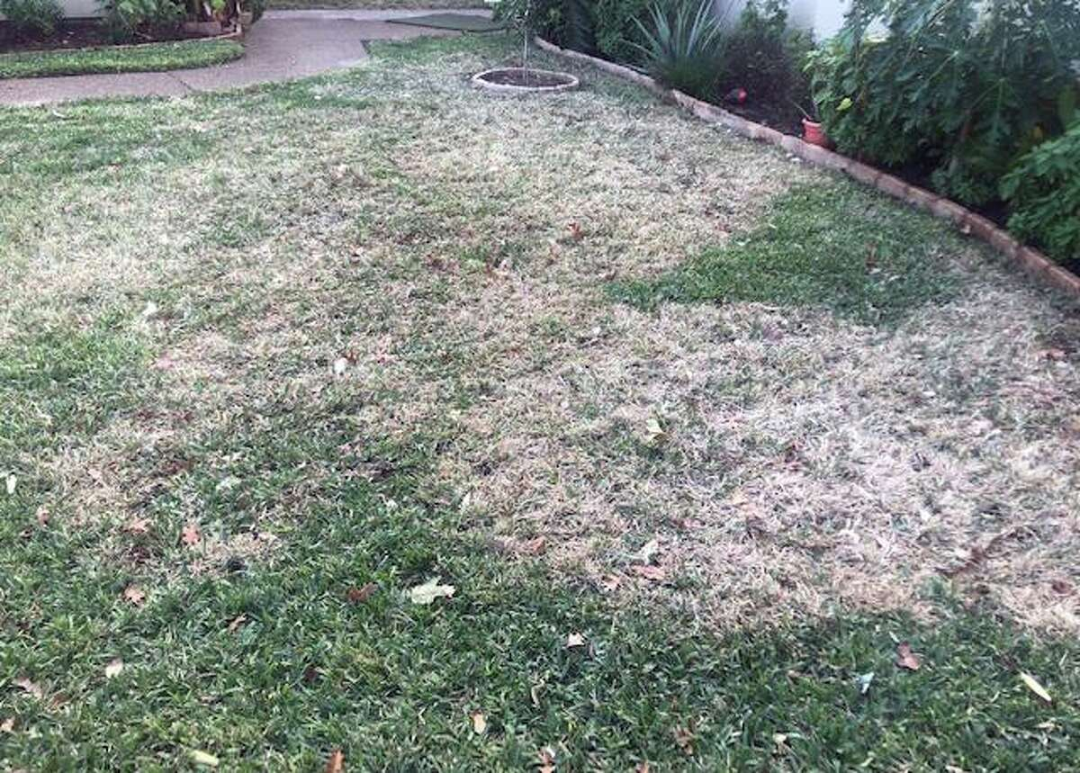 This is a great example of how a lawn looks in mid-winter when brown patch has hit in the the prior fall.