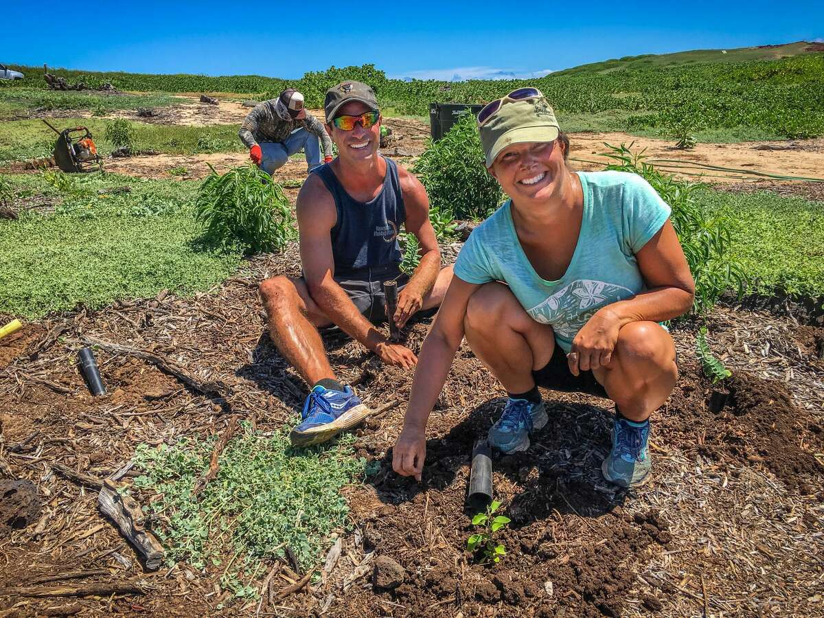 Molokai Land Trust staff and volunteers out plant naio, a'ali'i, kului, 'akia, 'ilima papa and aweoweo papa on July 2, 2020.