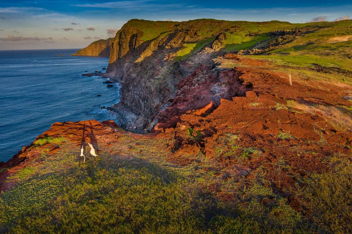 An image of the Molokai Land Trust shows albatross decoys in the lower left corner.