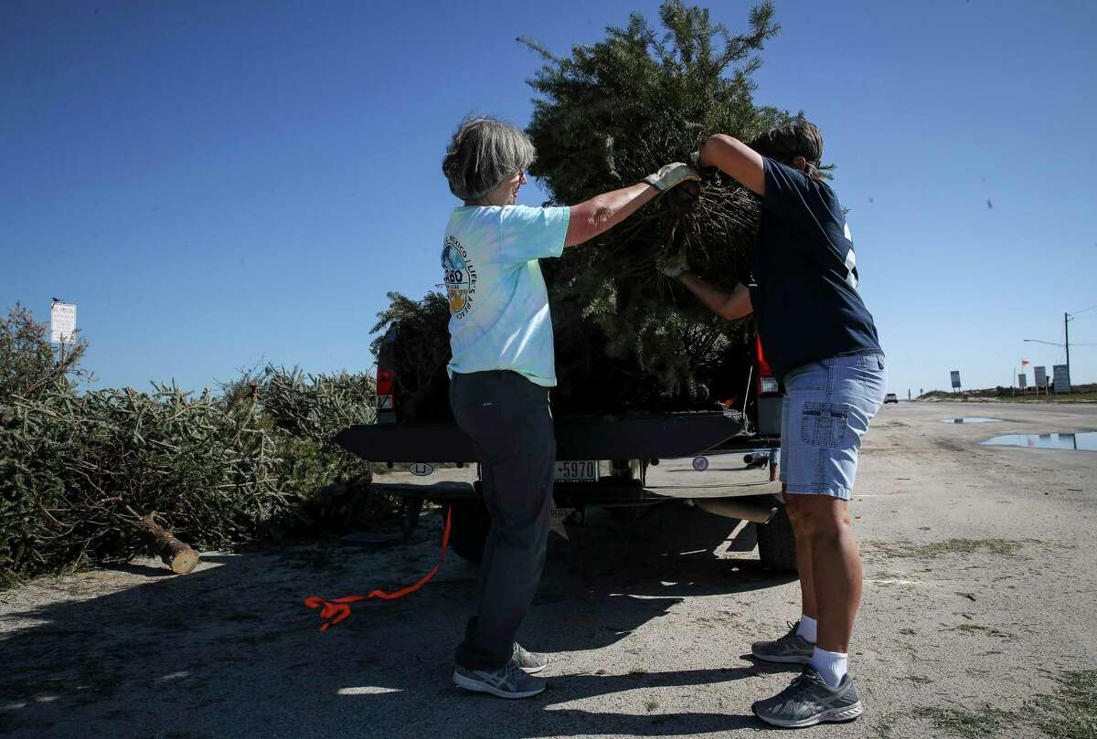 Terry Doyal, left, and her friend Barbara Perk unload Christmas trees Tuesday, Jan. 5, 2021, in Surfside Beach. The pair gathered trees from around Lake Jackson to drop off for dune restoration.