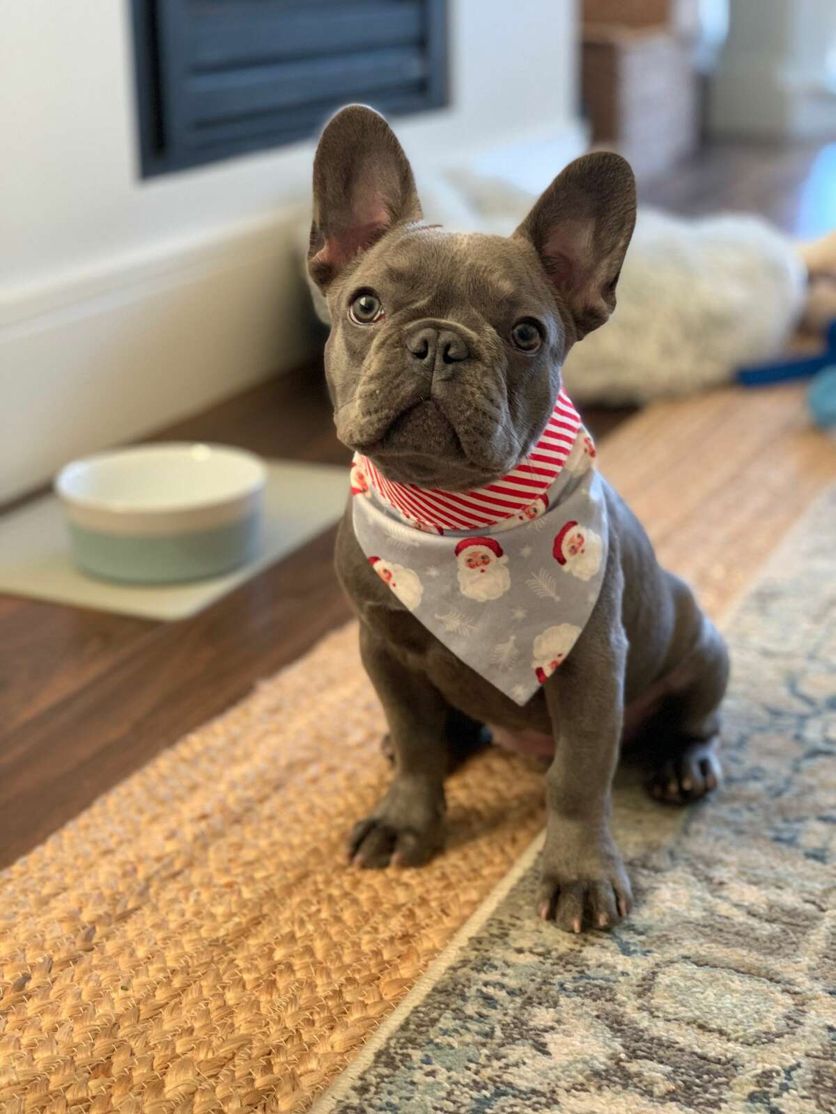 San Francisco resident Sarah Vorhaus' 5-month-old French bulldog, Chloe was stolen when she was assaulted at gunpoint in Russian Hill on Jan. 5, 2021, police say.
