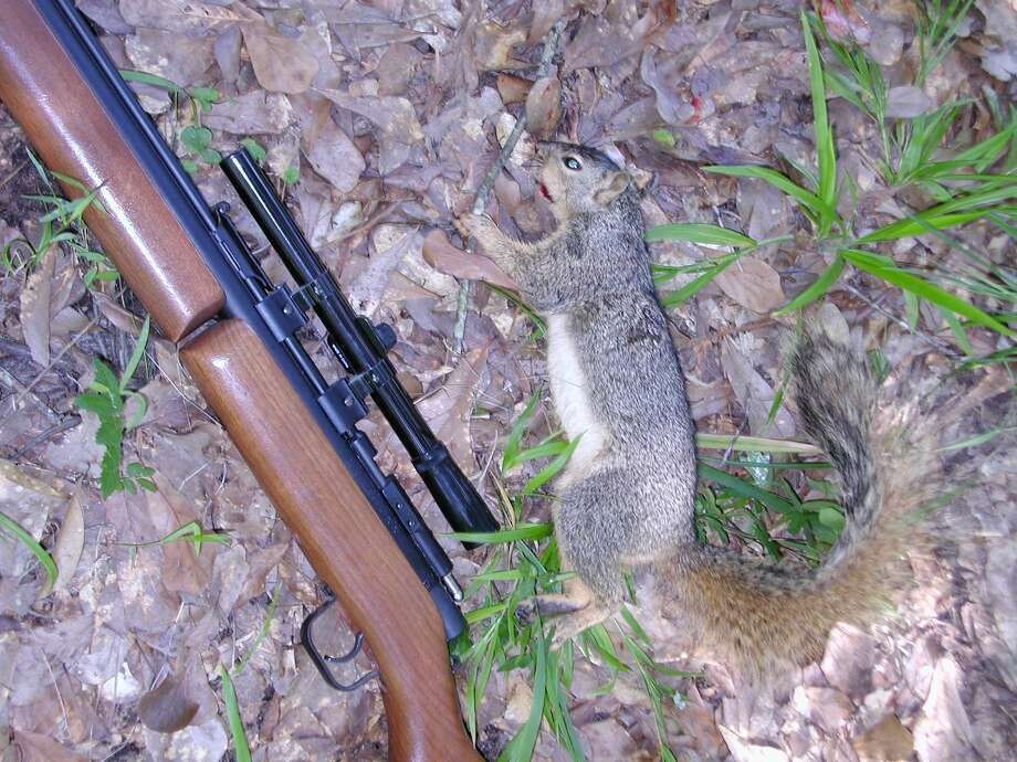 This bushy tail was taken with a head shot at about 60 feet with a .177 caliber pellet from this Benjamin/Sheridan air rifle. Photo: Larry J. LeBlanc