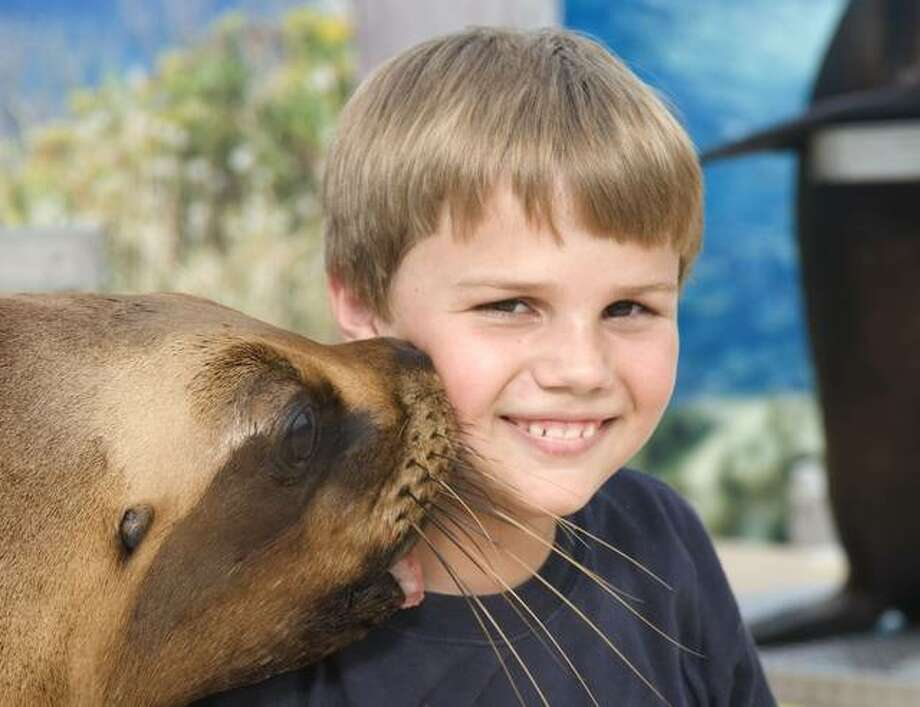 Raging Rivers Water Park will host a traveling sea lions show in June. The show is operated by Squalus, Inc., an organization that provides homes for beached sea lions unable to return to the wild.