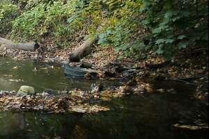 Great Brook stream in New Milford is in poor shape.