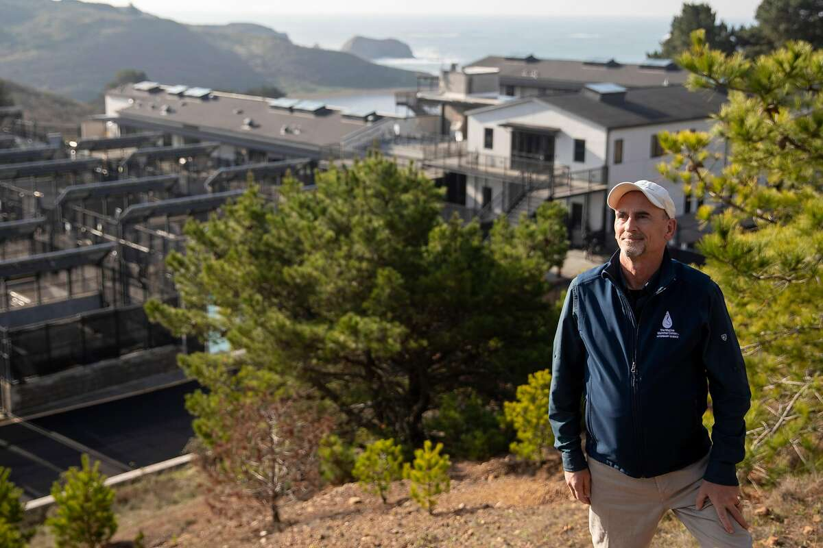 """Chief pathologist Pádraig Duignan, shown above at the Marine Mammal Center in the Marin Headlands, has been performing necropsies on whales and said he expects """"to see events like this happening at greater frequency than we did in the past."""""""