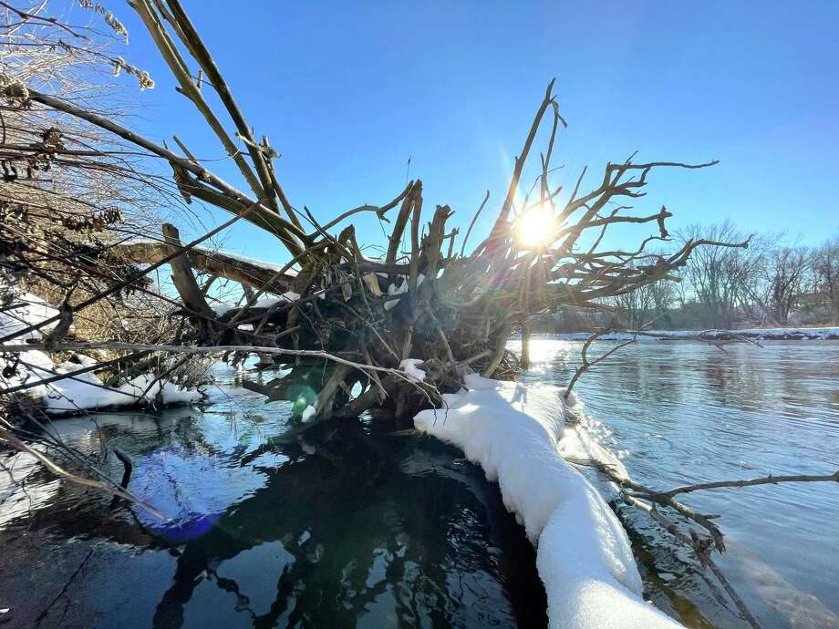 The sun shines through aged roots of a fallen tree laying in the Muskegon River on Friday. The submerged tree can be spotted walking the trail from Swede Hill Park toward Northend Park. (Pioneer photo/Bradley Massman)