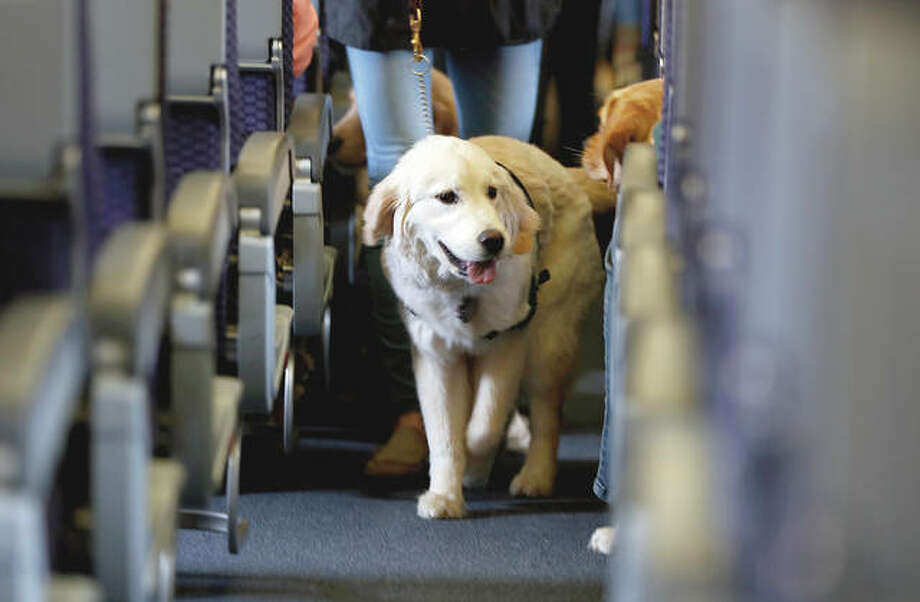United Airlines announced Friday that starting with flights in February it will no longer accept emotional-support animals. It will let trained service dogs fly for free in the cabin, but owners of other animals will have to pay a pet fee to put them in the cargo hold or a carrier that fits under a seat. Photo: Julio Cortez | AP
