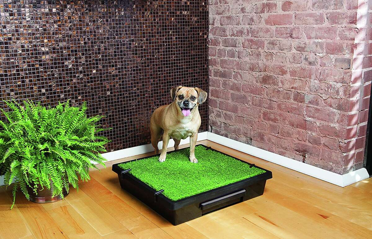 PetSafe Pet Loo Portable Indoor & Outdoor Dog Potty, $79.95 at Chewy