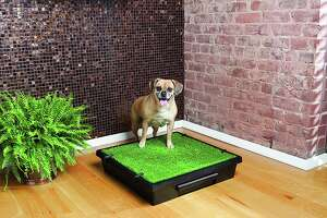 PetSafe Pet Loo Portable Indoor & Outdoor Dog Potty , $79.95 at Chewy