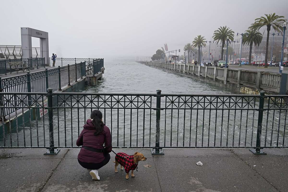 A woman and her dog look out at king tides near Pier 14 along the Embarcadero Monday, Jan. 11, 2021, in San Francisco. The highest tides of the year known as the king tides are returning to the Bay Area this week.