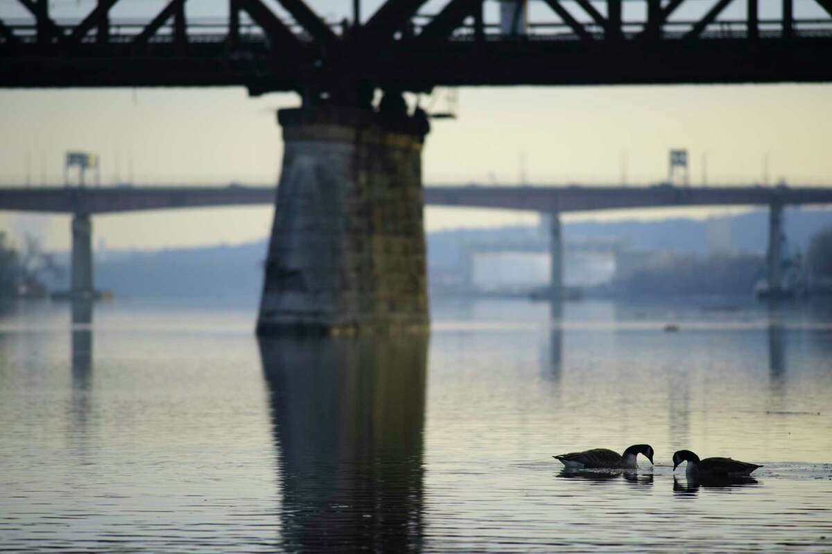 Two geese feed while swimming on the Hudson River on Tuesday, Jan. 12, 2021, in Albany, N.Y. (Paul Buckowski/Times Union)