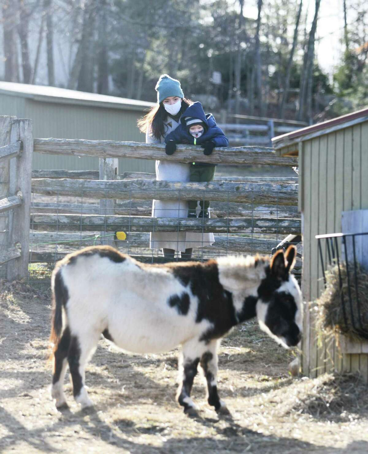 Stamford's Maggie Heinz and her son, Robbie, 3, look upon a Jacob ram at the Stamford Museum & Nature Center on Sunday. Heckscher Farm at the Museum & Nature Center features a maple sugar house, organic farm, and dozens of animals.