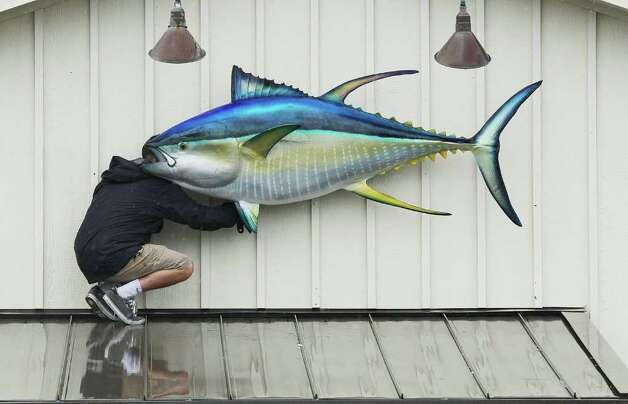 KILL DEVIL HILLS, NC - SEPTEMBER 03: A man installs a large fish back onto the front of a resturant after Hurricane Earl on September 3, 2010 in Kill Devil Hills, North Carolina. Hurricane Earl was downgraded to a category 2 before brushing the Outer Banks early Friday morning causing minimal damage.  (Photo by Mark Wilson/Getty Images) Photo: Mark Wilson, Getty Images / 2010 Getty Images