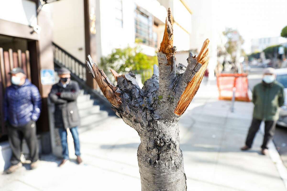 A vandalized cherry blossom tree in front of the Japanese Cultural and Community Center in San Francisco's Japantown. The center hopes to replace the damaged trees before the cherry blossoms bloom in the spring.