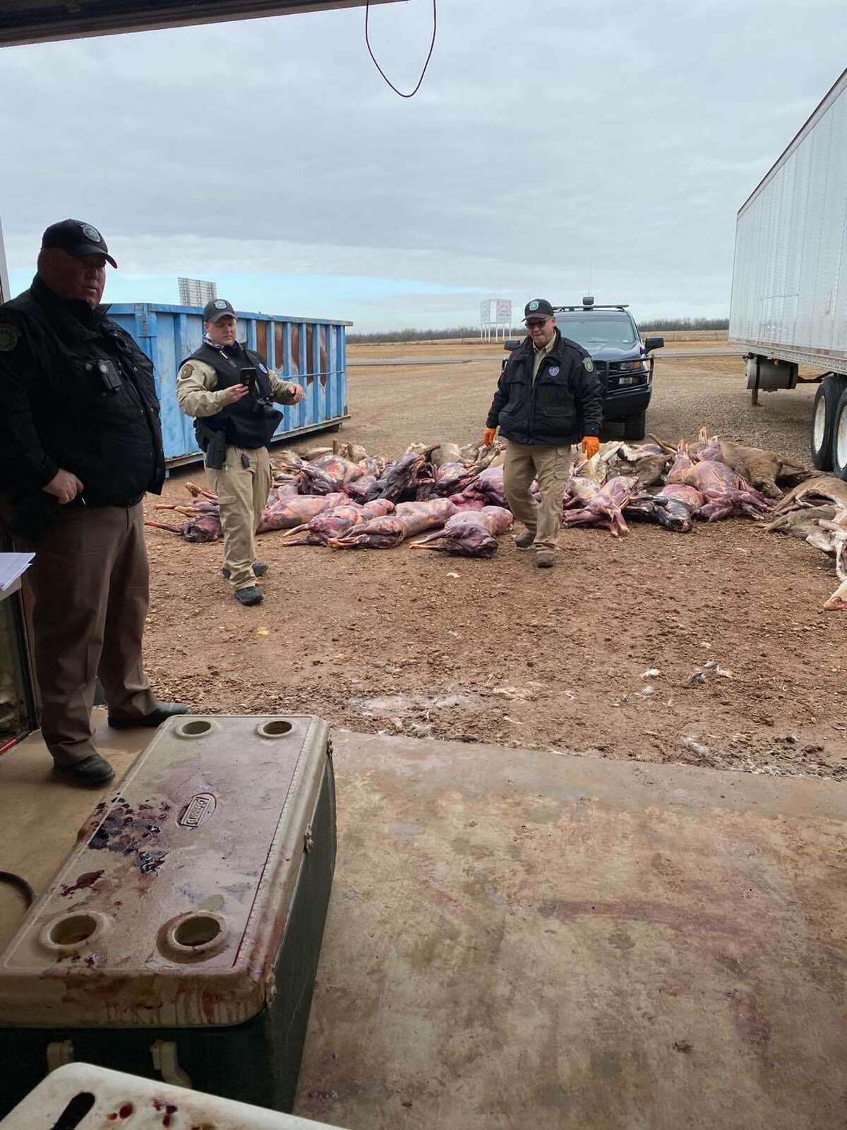 On Saturday, Texas Game Wardens found 80 white-tailed deer carcasses unfit for human consumption in coolers at a meat processing facility in Wichita County.
