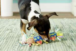 Petstages Cool Teething Stick Tough Dog Chew Toy , $6.99 at Chewy