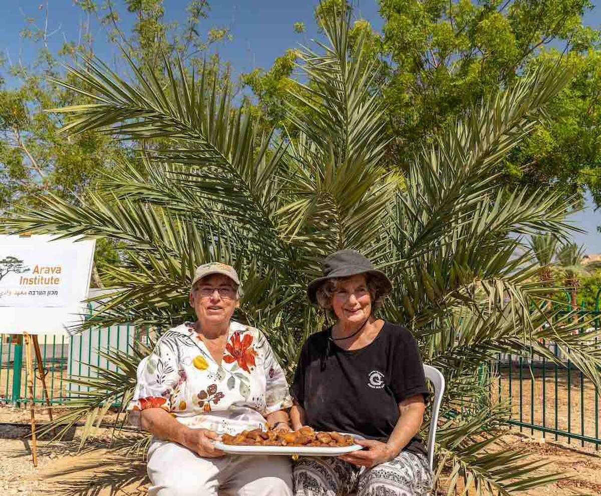 Researchers Dr. Elaine Soloway of the Arava Institute for Environmental Studies, (left), with Dr. Sarah Sallon of Hadassah Medical Center, are pictured moments after recently picking the first harvest of dates on a previous trip for doing so.