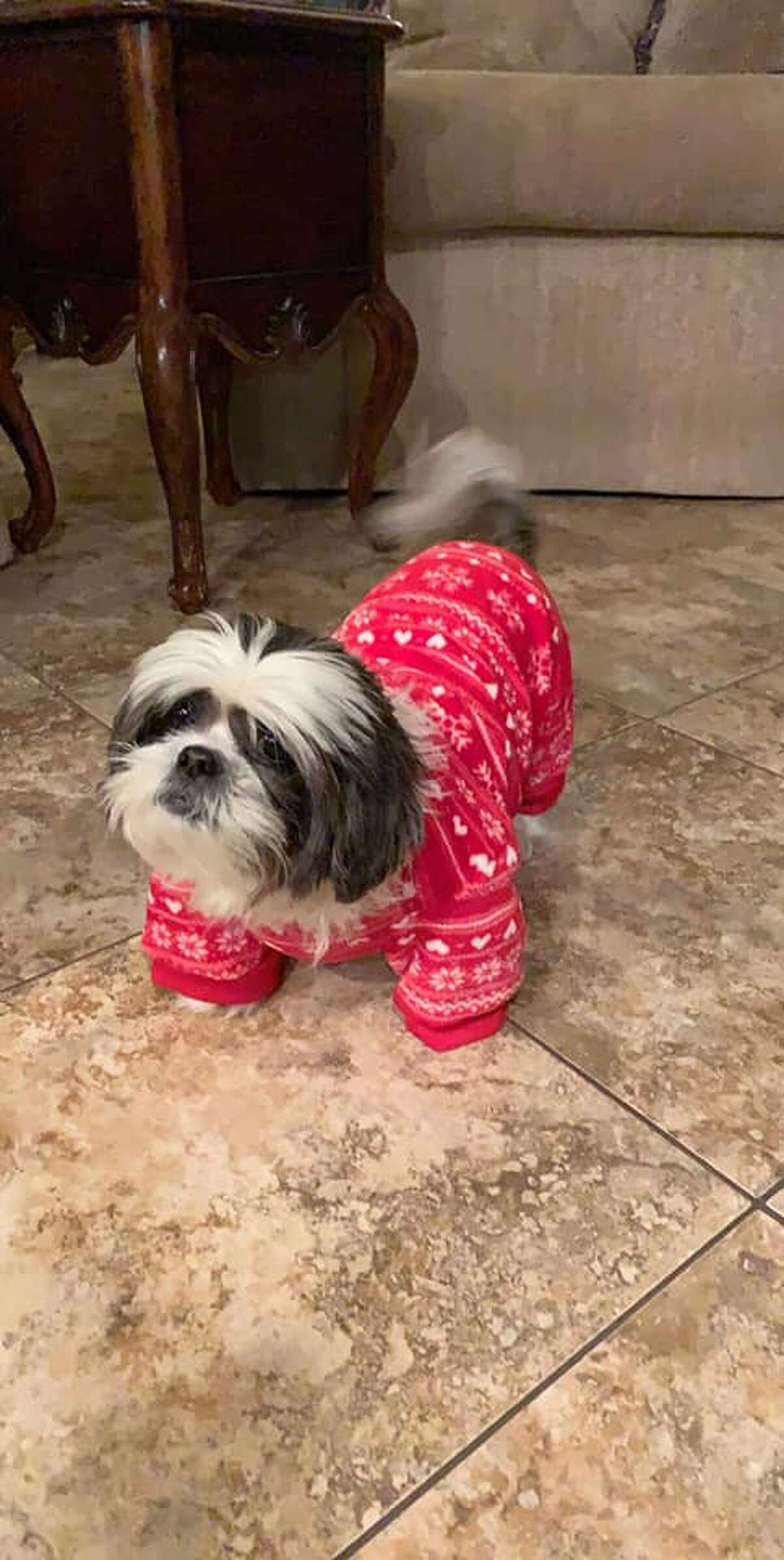 Jazmin Gonzalez's doggie in a holiday-themed fit.