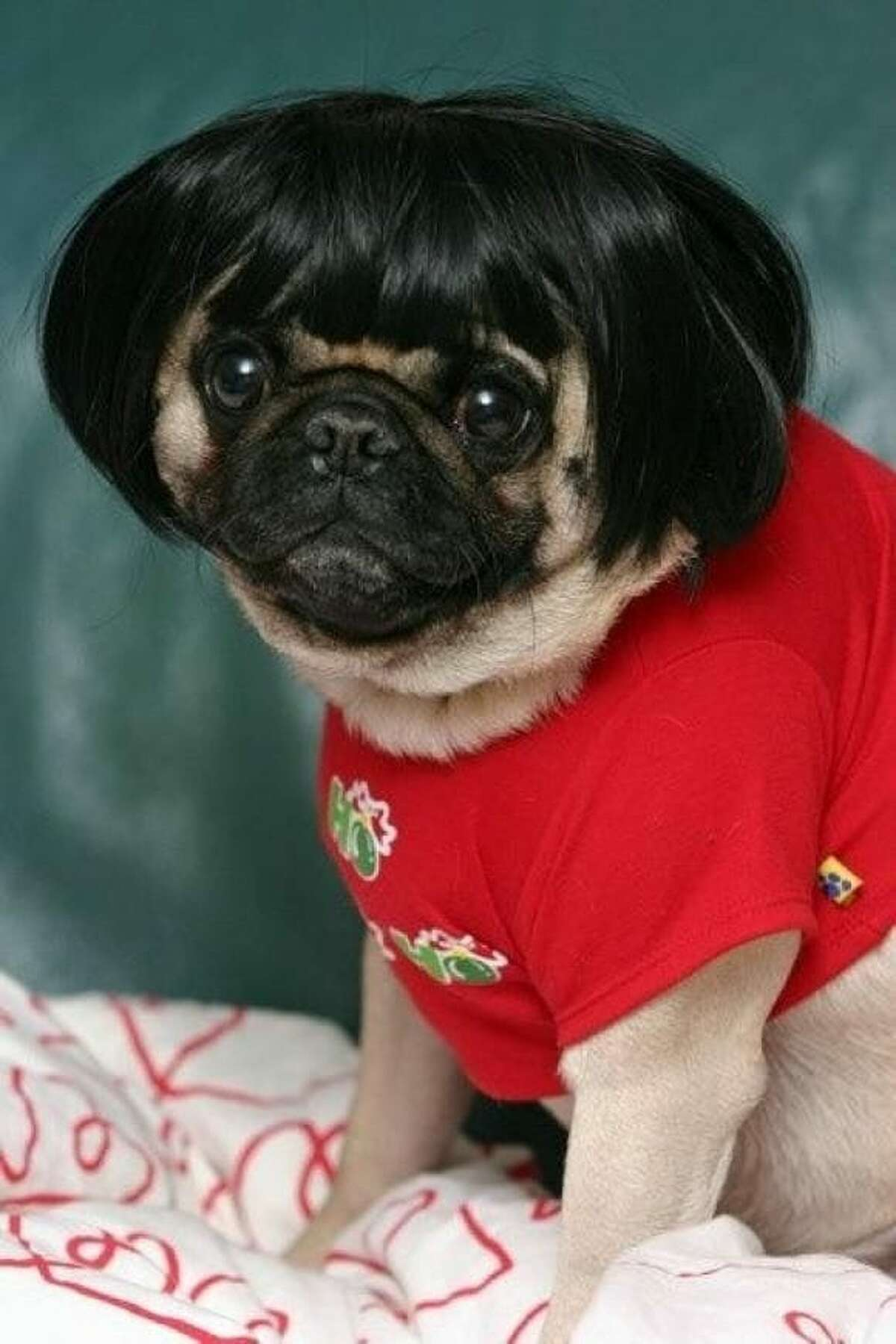 Obie Lopez's pug is giving us Anna Wintour wig vibes with a dashing '90s yearbook backdrop.
