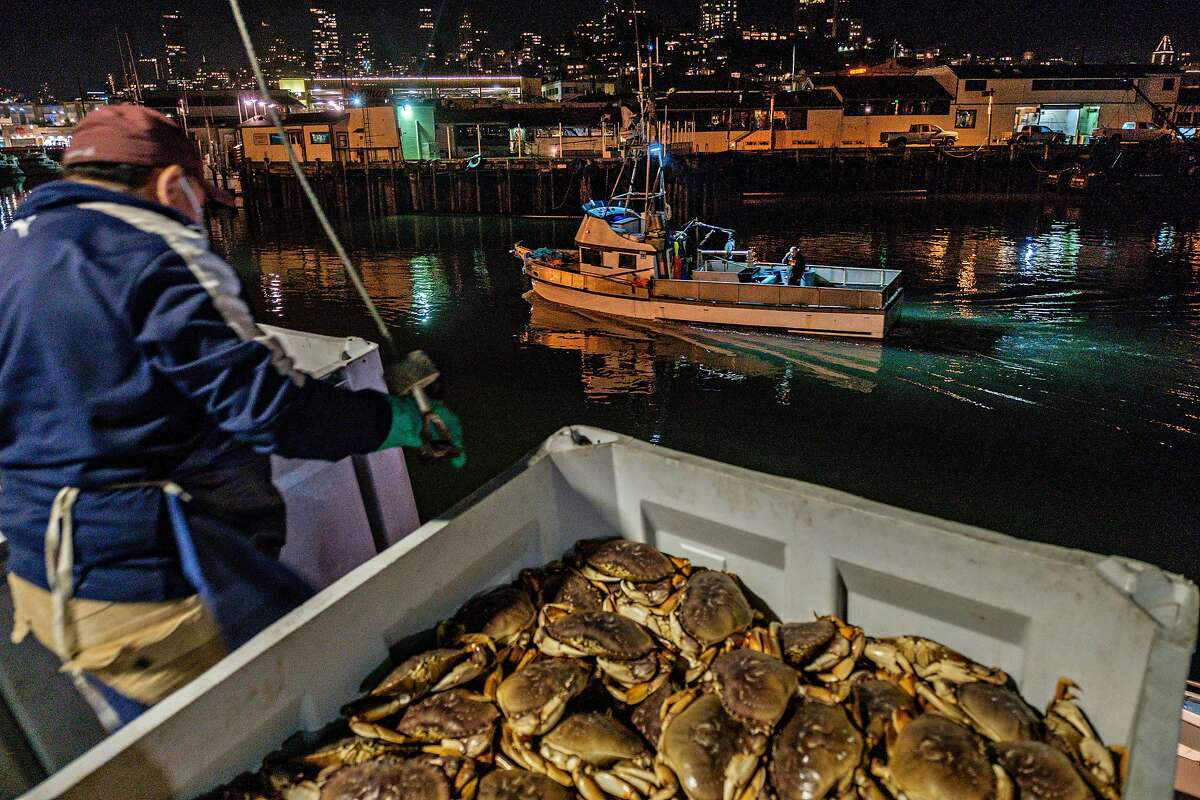 Dungeness crab is unloaded as the first catches of the season arrive in San Francisco on Wednesday.