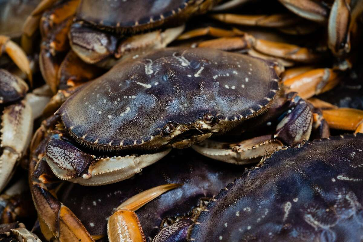 With a relatively low number of crabs in the water, quality and prices are expected to be high.